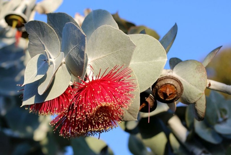 6 Reasons Why You Need Eucalyptus Oil In Your Life!