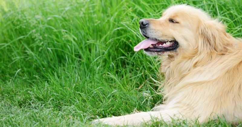 How B12 Could Help Your Furriest Family Member