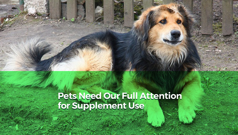 Pets Need Our Full Attention for Supplement Use