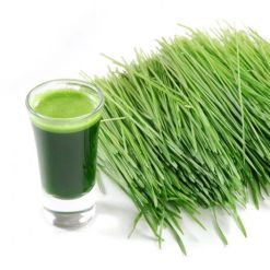 Add Wheatgrass to List of 'Super Foods' Worth Checking Out