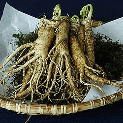 Ginseng: Its Sources, Benefits and Uses