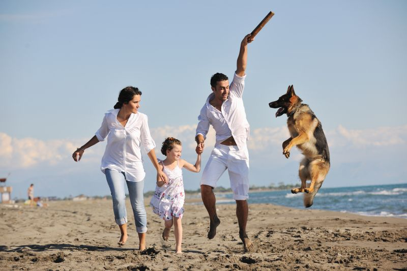 Vitamin B12 for Humans and Pets
