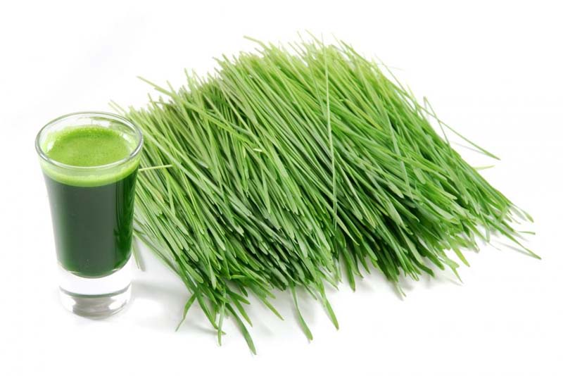 What Are The Benefits Of Wheatgrass Powder