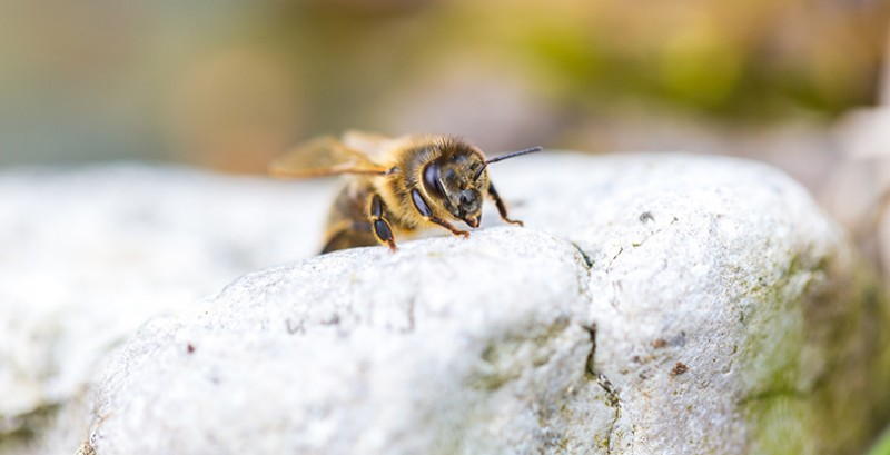 What Is Bee Propolis, and How Can It Benefit Me?