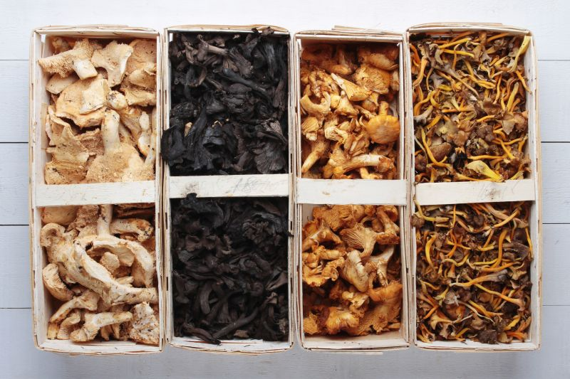 What We Need to Know about Mushrooms